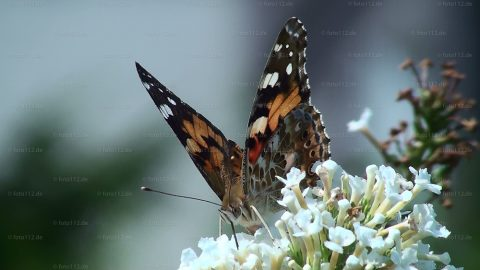 Schmetterlinge-02