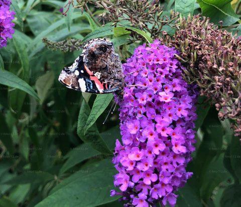 Schmetterlinge-04