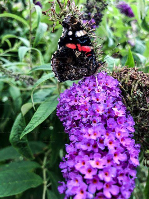Schmetterlinge-05